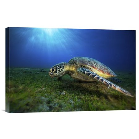 Global Gallery Green Turtle By Barathieu Gabriel Photographic Print On Wrapped Canvas