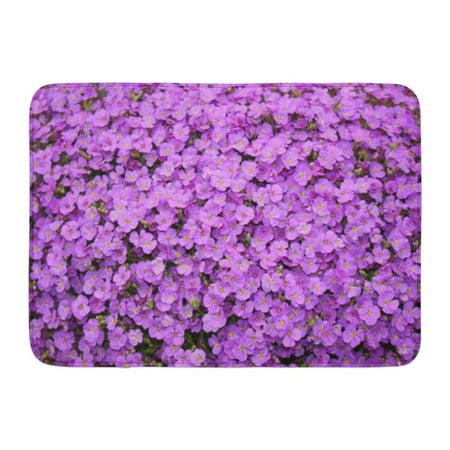 GODPOK Purple Aubrieta Flowers Aubretia Deltoidea are Flowering Plants Originate from Southern of Europe Rug Doormat Bath Mat 23.6x15.7 inch