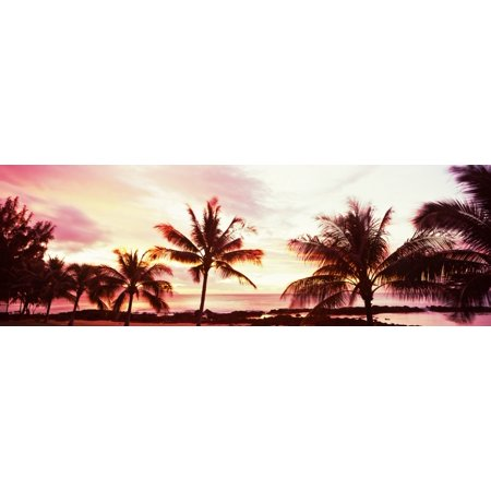 Palm Trees At Sunset Waikiki Beach Honolulu Oahu Hawaii Usa Stretched Canvas Panoramic Images 36 X 12