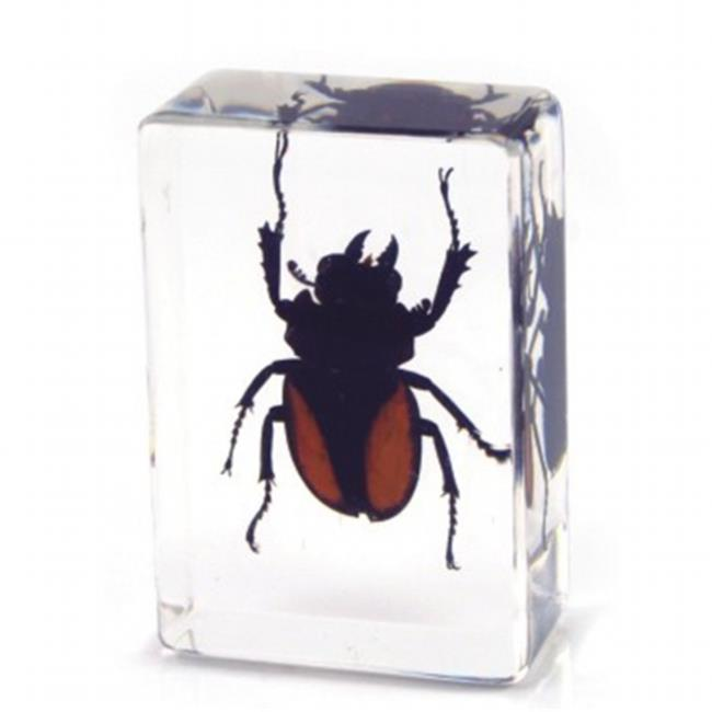 ED SPELDY EAST PW115 Paperweight  small  Stag Beetle