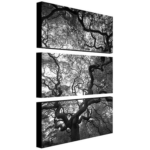 """Trademark Art """"Speaking"""" Canvas Art by CATeyes, 3-Piece Panel Set, 16x32"""