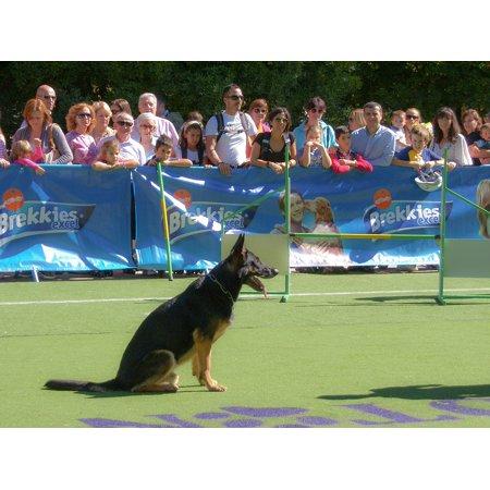 Canvas Print German Shepherd Dog Dog Pet Animals Pets Puppy Stretched Canvas 10 x 14
