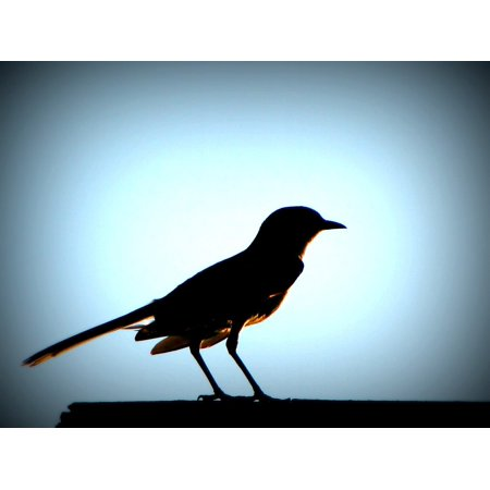Canvas Print Sunset Black Silhouette Glow Bird Shadow Stretched Canvas 10 x 14