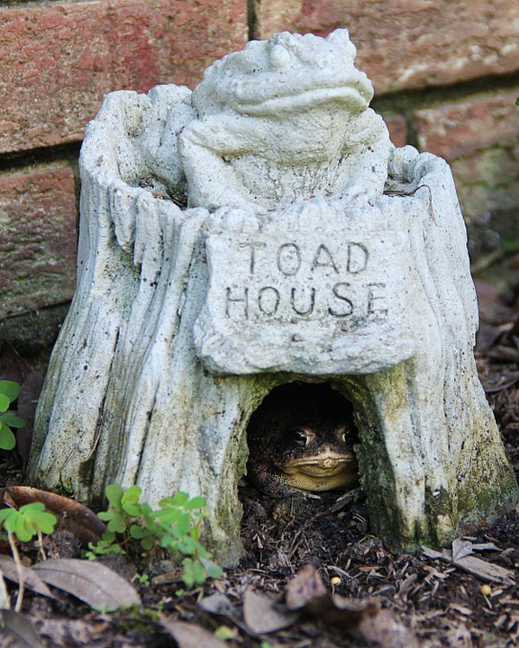 Toad House Garden Toad Frog Green Amphibian Poster Print 24 X 36    Walmart.com