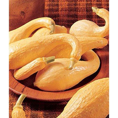 Squash Early Crookneck Seed - 1