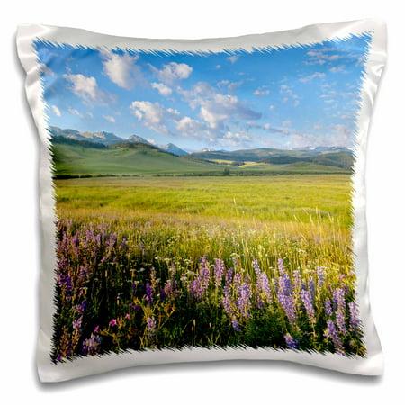 3dRose Wildflowers, Gallatin Mountain Range, Bozeman Montana - US27 CHA2510 - Chuck Haney - Pillow Case, 16 by (Columbia Gallatin Range)