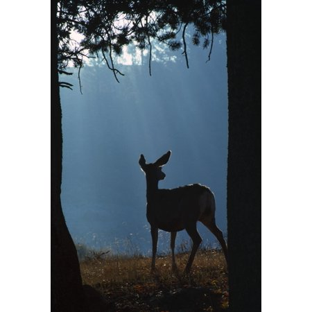 Deer In A Forest Canvas Art - Natural Selection David Ponton  Design Pics (12 x 18)