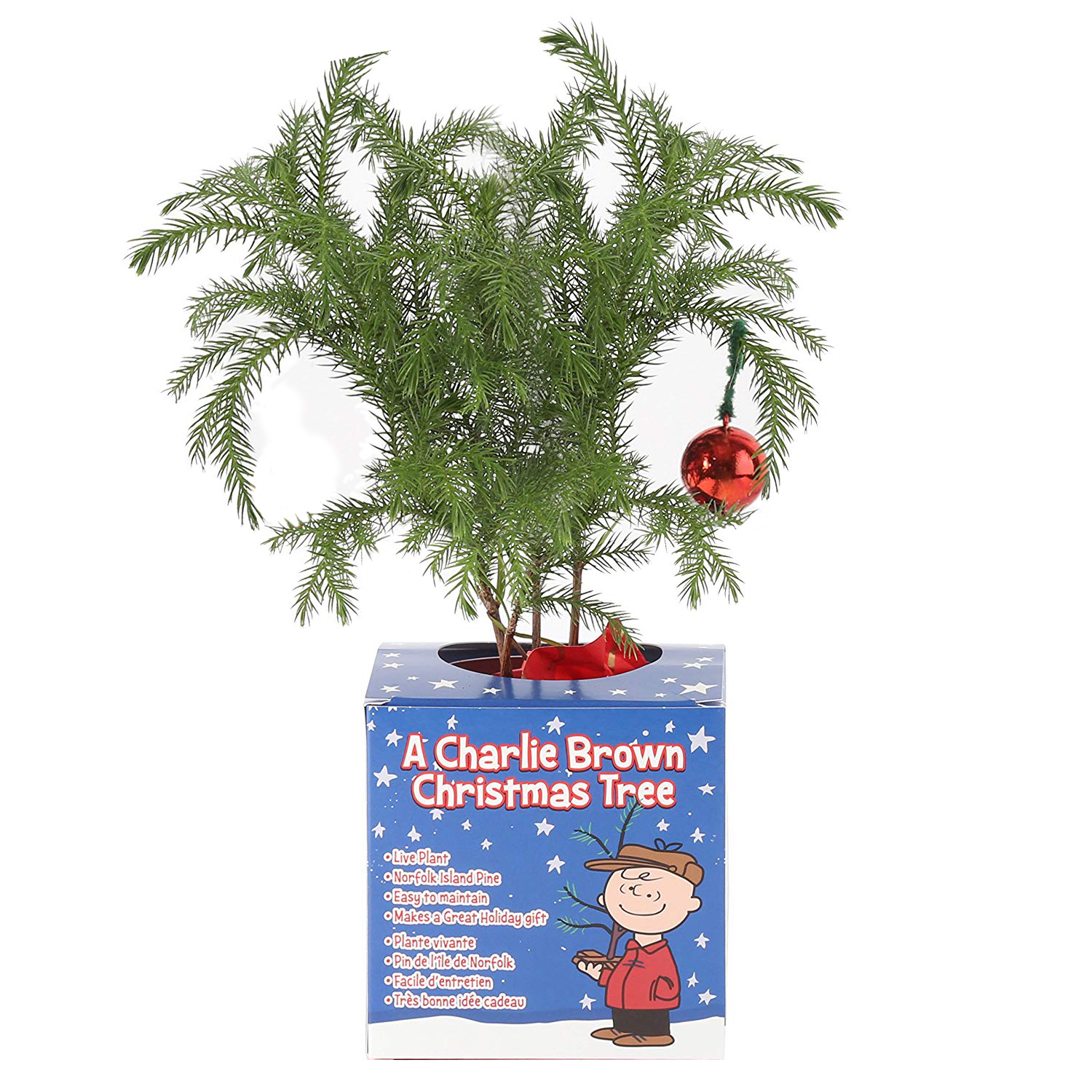 "Costa Farms Live Indoor 10 to 12"" Tall Charlie Brown Christmas Tree - Walmart.com"