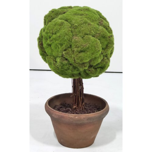 Gold Eagle USA Moss Ball Topiary in Planter
