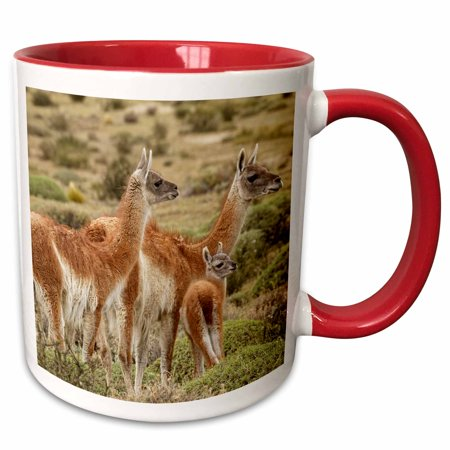 3dRose Guanaco family and baby, Torres del Paine NP, Chile, Patagonia - Two Tone Red Mug, 11-ounce