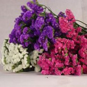 GlobalRose 20 Bunches of Fresh Cut Assorted Statices Flowers - Fresh Flowers For Birthdays, Weddings or Anniversary.