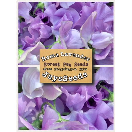 Roma Lavender Sweet Pea Seed Packet + Free Pack Mixed (Designs Sweet Pea)