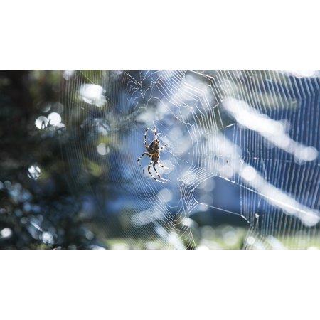 Canvas Print Sunshine Colorful Spider Summer Stretched Canvas 10 x 14](Colorful Spider)