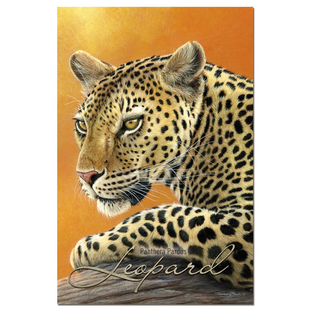 Tree-Free Greetings Classic Leopard Econotes Blank Note Cards-FS66712