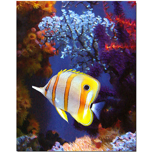 "Trademark Fine Art ""Longnose Butterfly Fish"" Canvas Wall Art by Amy Vangsgard"