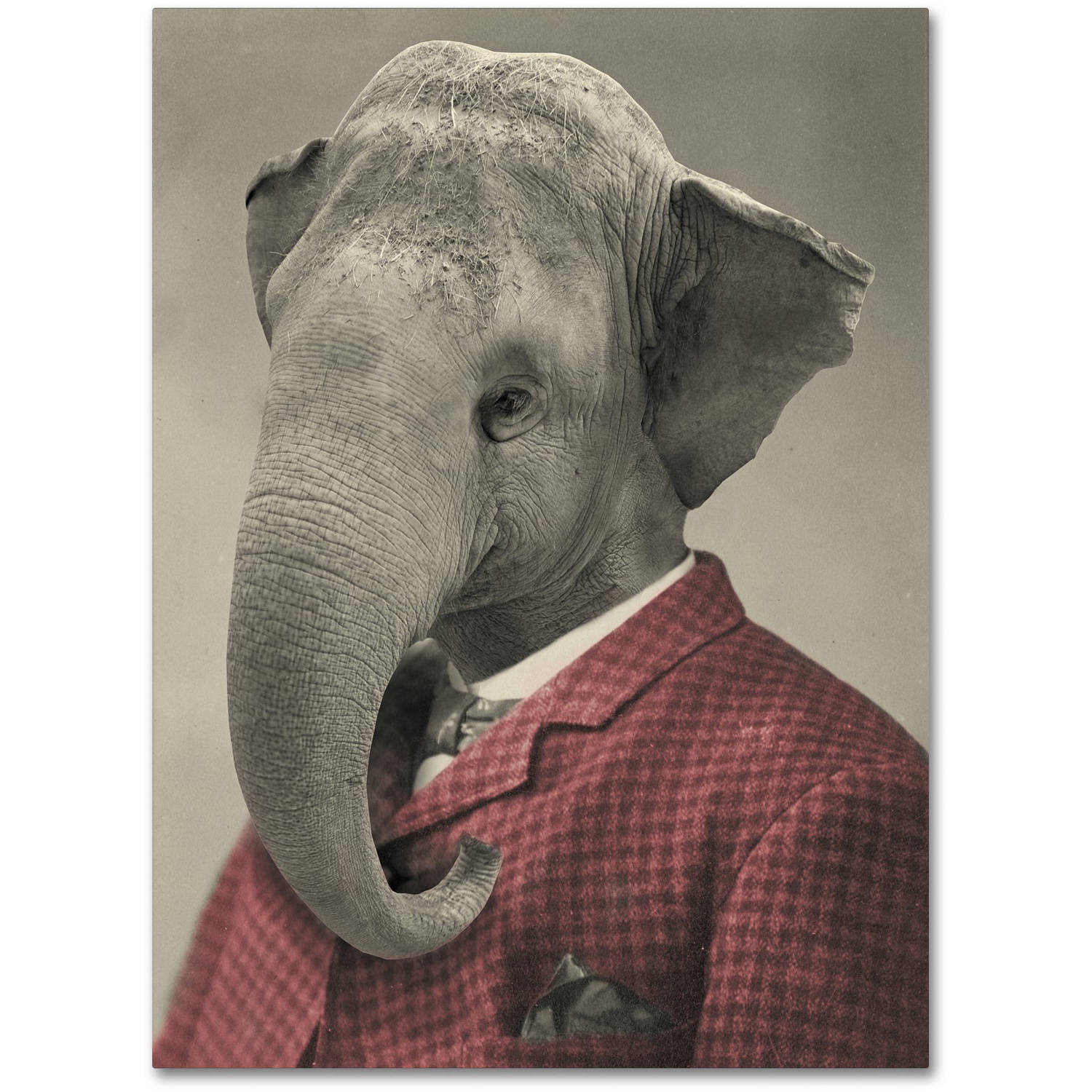 Trademark Fine Art 'Wild Animals #1' Canvas Art by J Hovenstine Studios