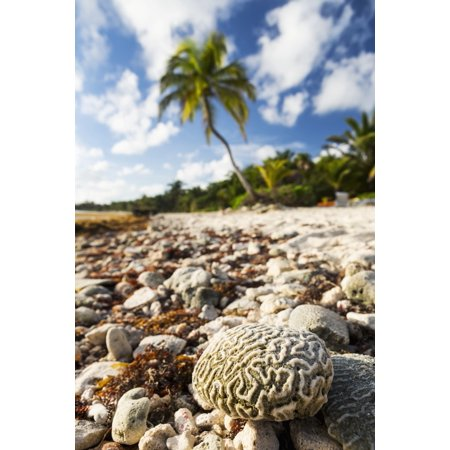 Close Up Of A Brain Coral On A Coral Beach With Coconut Tree In Background With Blue Sky And Clouds Akumal Quintana Roo Mexico Posterprint
