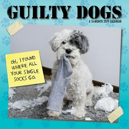 2019 Guilty Dog Wall Calendar