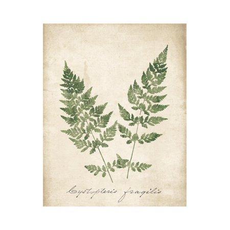 Vintage Ferns VII no Border Print Wall Art By Wild Apple