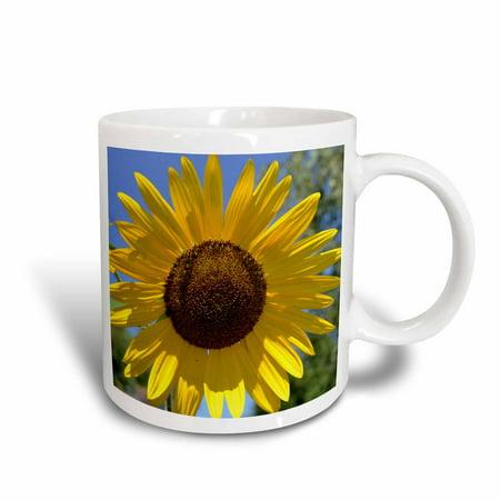 3dRose Beautiful Yellow Sunflower Flowers Macro Photography, Ceramic Mug, 15-ounce
