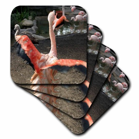 - 3dRose Chilean Flamingo with open wings - Soft Coasters, set of 8