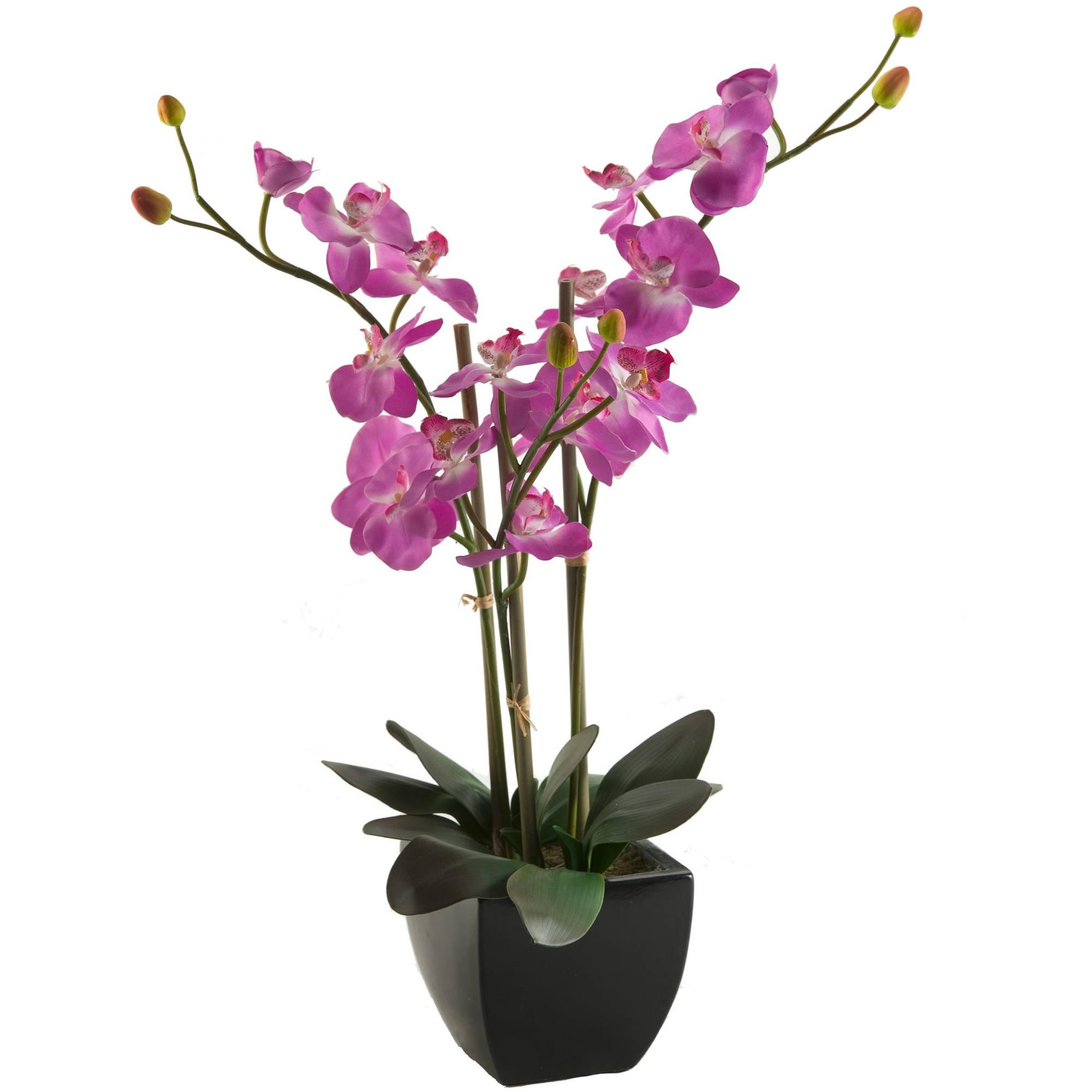 D&W Silks Purple Phael Orchids in Black Ceramic Planter