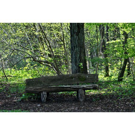 LAMINATED POSTER Nature Bank Silent Forest Resting Place Bank Seat Poster Print 24 x
