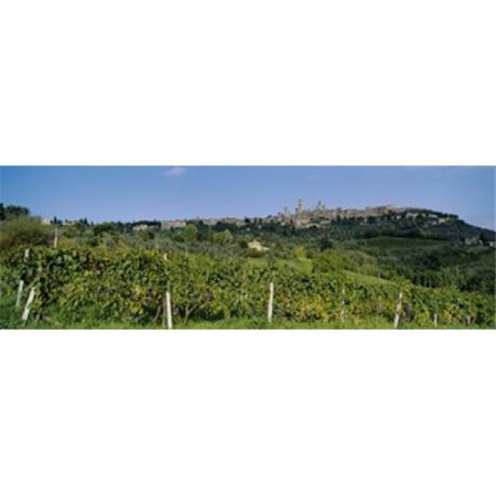 Low Angle View Of A Vineyard  San Gimignano  Tuscany  Italy Poster Print by  - 36 x 12 - image 1 de 1