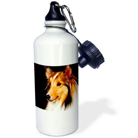 3dRose Sheltie Shetland SheepDog, Sports Water Bottle, 21oz