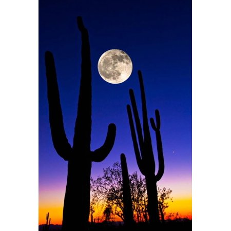Moon over Saguaro Cactus (Carnegiea Gigantea), Tucson, Pima County, Arizona, USA Print Wall Art By Green Light Collection