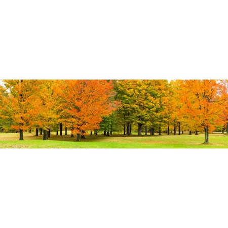 Autumn trees in a park Chestnut Ridge County Park Orchard Park Erie County New York State USA Poster Print by Panoramic Images - Halloween Park Ridge