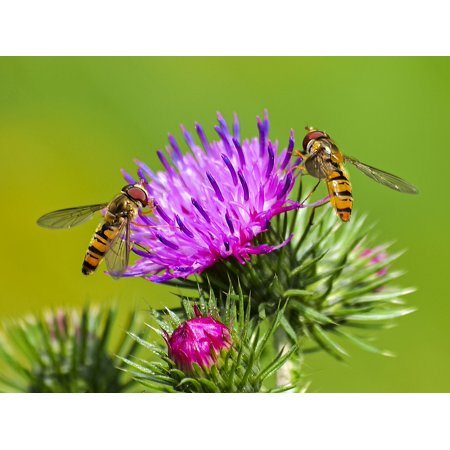 LAMINATED POSTER Nature Animal Insect Hoverfly Blossom Bloom Poster Print 24 x 36