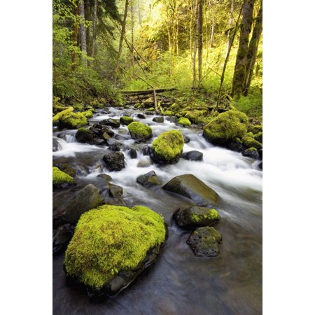 Water Flowing By Moss Covered Rocks In A Stream Canvas Art - Craig Tuttle  Design Pics (12 x 19)