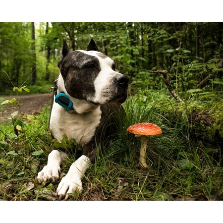 Canvas Print Animal Nature View Dog Man's Best Friend Pet Stretched Canvas 10 x (Best Cheap Canvas Prints)