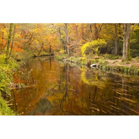 Autumn Colours around the River Teign and Hannicombe Wood Near to Fingle Bridge Print Wall Art By Julian Elliott (Wrap Around Bridge)