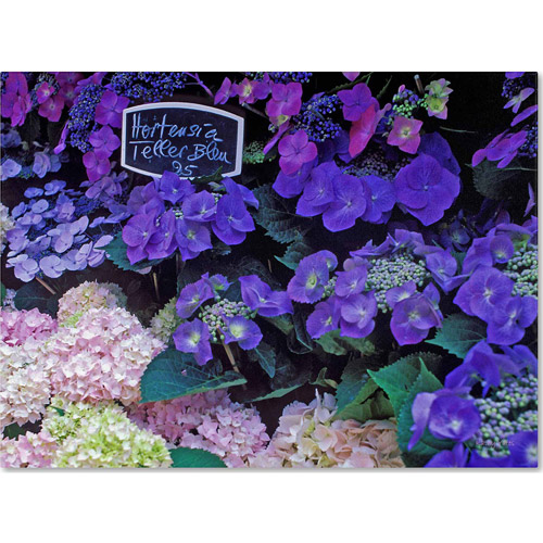 "Trademark Fine Art ""Paris Flower Market Hydrangeas"" Canvas Art by Kathy Yates"