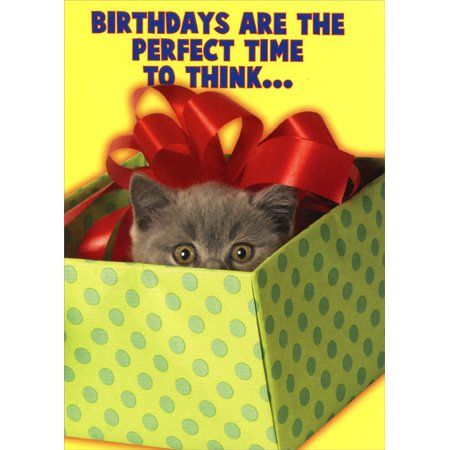 Oatmeal Studios Kitten Popping Head Out Of Present Funny Birthday Card