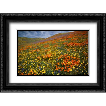 Hills covered with California Poppies and Lupine Tehachapi Mountains, California 2x Matted 24x18 Black Ornate