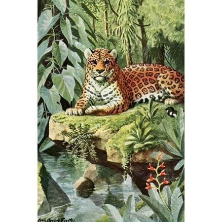 Burgess Animal Book For Children 1920 Jaguar Canvas Art   La Fuertes  24 X 36