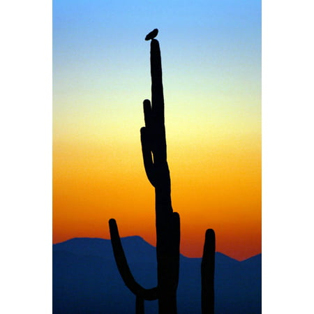 Owl at Sunset, Fine Art Photograph By: Douglas Taylor; One 24x36in Fine Art Paper Giclee Print - Owl Photo