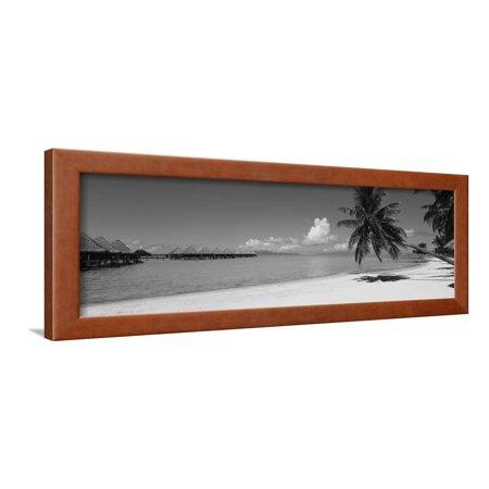 Palm Tree on the Beach, Moana Beach, Bora Bora, Tahiti, French Polynesia Framed Print Wall Art By Panoramic