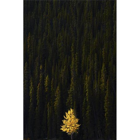 Posterazzi DPI1800735LARGE Yellow Tree in Green Forest Poster Print by Richard Wear, 22 x 34 - Large - image 1 de 1