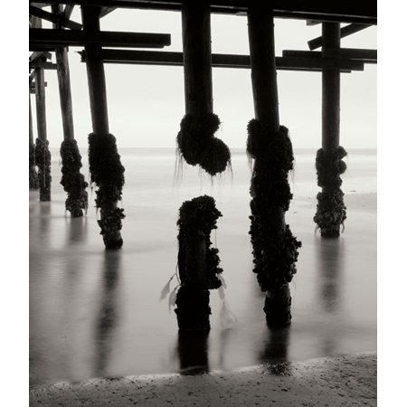 Pier Pilings 10, Fine Art Photograph By: Lee Peterson; One 22x28in Fine Art Paper Giclee Print ()