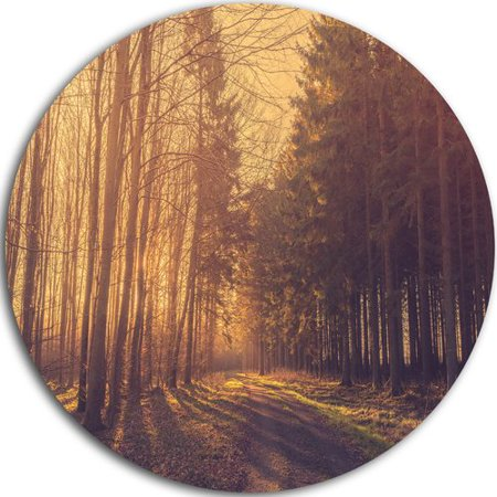 Design Art 'Pine Tree Forest by Road' Photographic Print on Metal