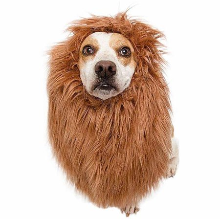 Lion Mane Costume and Big Dog Lion Mane Wig - Large Dog Costumes by Pet Krewe - Hot Dog Costumes For Pets
