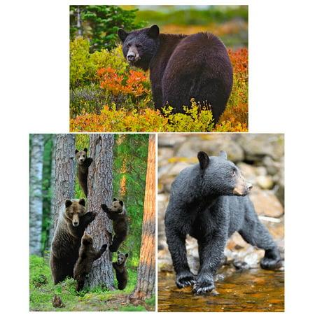 Bears 3 lenticular 3d postcard greeting cards walmart bears 3 lenticular 3d postcard greeting cards m4hsunfo