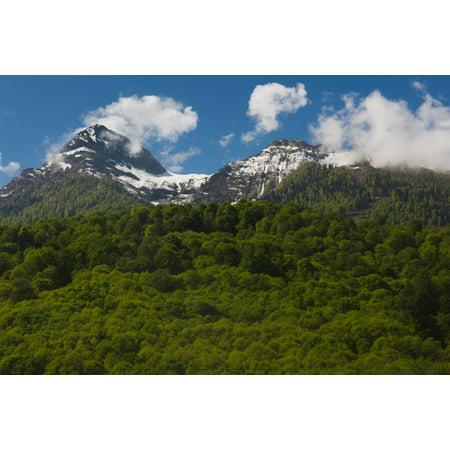 Russian Landscape - Trees in mountain landscape Carousel Mountain Krasnaya Polyana Sochi Caucasus Mountains Russia Poster Print
