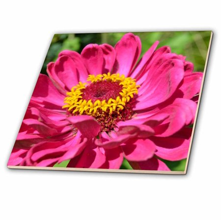 3dRose Summer Pink Zinnia Macro Flowers Photography - Ceramic Tile, 4-inch