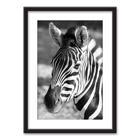wall26 - Framed Wall Art - A Zebra in Black White - Black Picture Frames White Matting - 23x31 - Zebra Print Picture