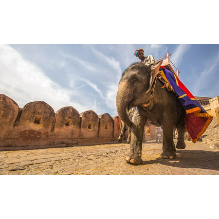 Framed Art for Your Wall Person Owner Animal Fort Ride Elephant Rider 10x13 Frame Fort Dodge Animal